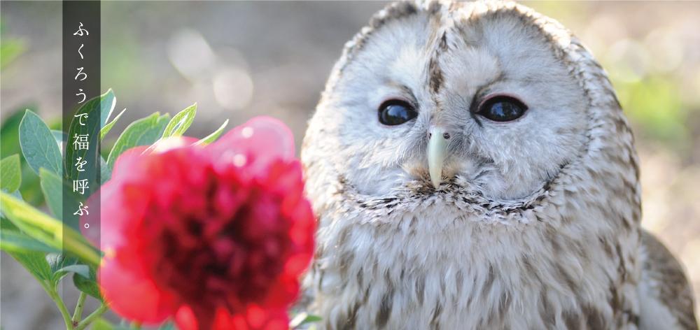 00-owl